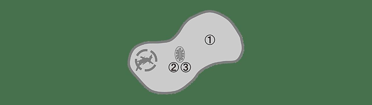 高校 生物 代謝12 ポイント2 左の図