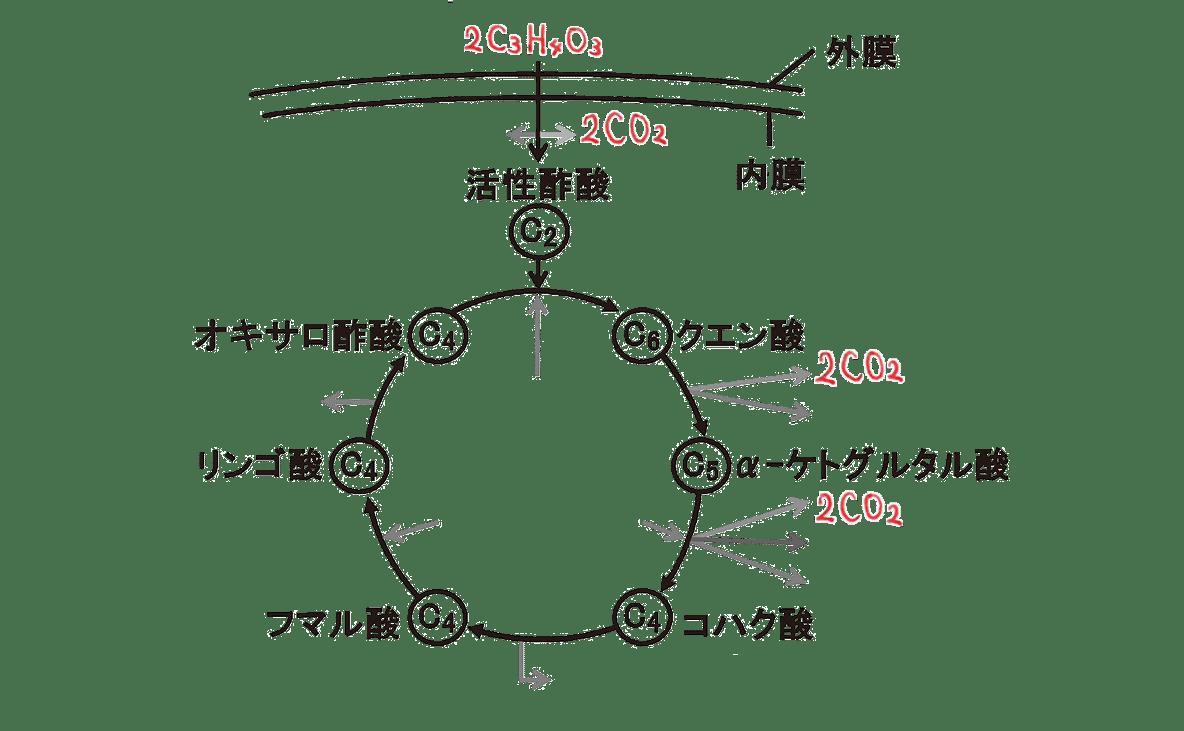 高校 生物 代謝13 ポイント2 図のみ・C3H4O3とCO2うめる