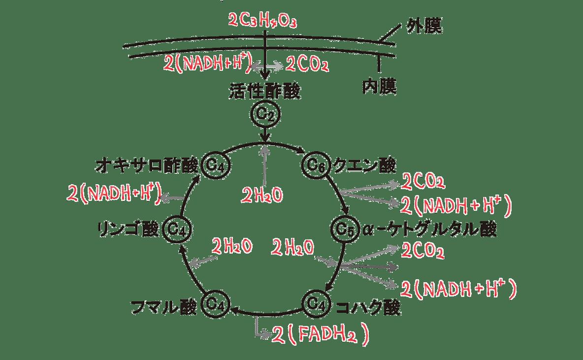 高校 生物 代謝13 ポイント2 図のみ・ATP以外うめる