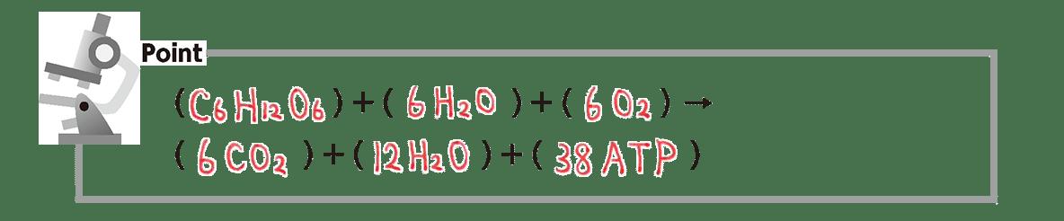 高校 生物 代謝14 ポイント3 下から1行目・21行目の式のみ