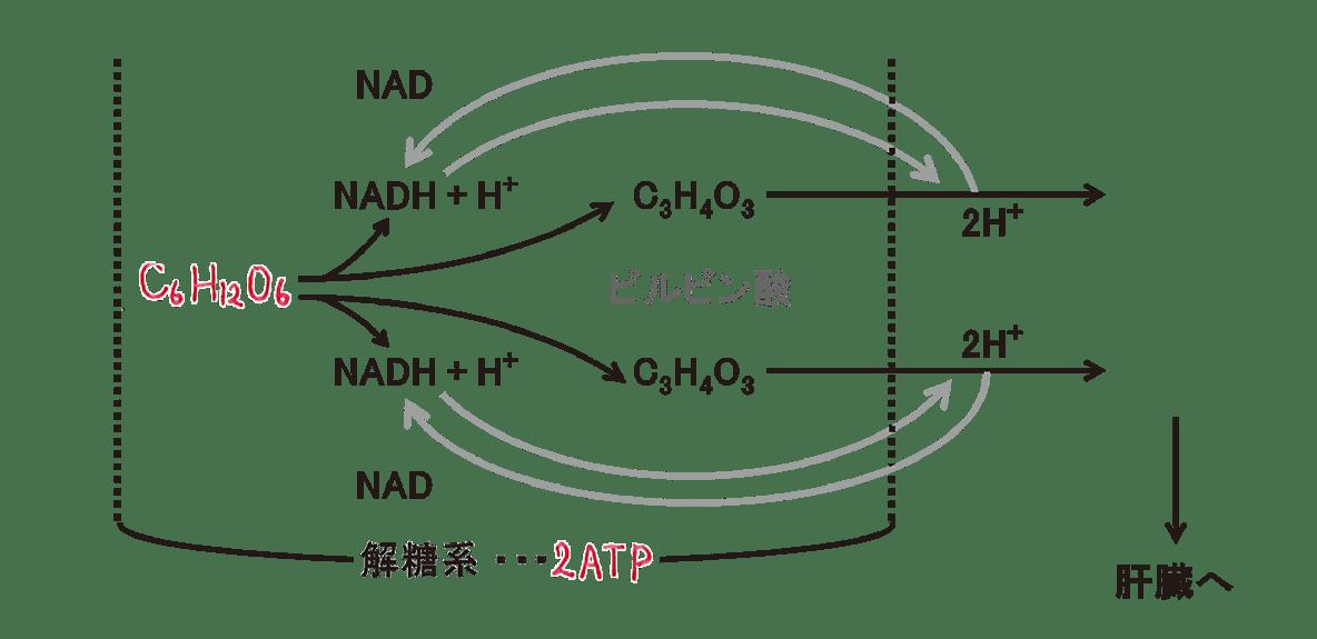 高校 生物 代謝15 ポイント2 図のみ、C6H12O6とATPのみうめる