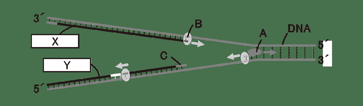 高校 生物 遺伝11 演習3 図