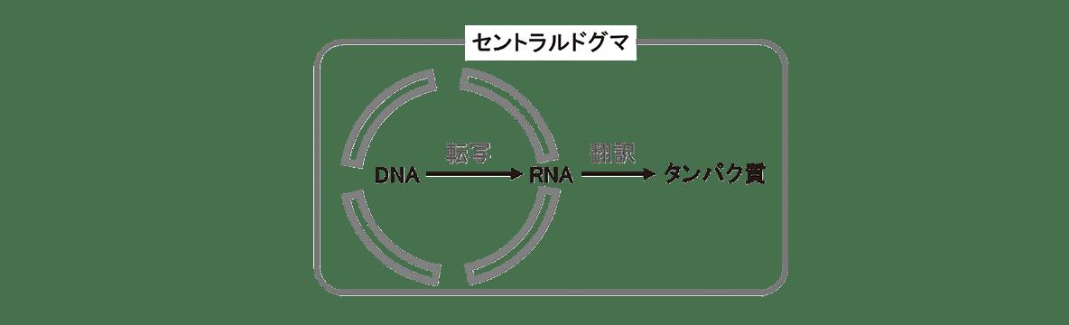 高校 生物 遺伝6 ポイント1 図のみ