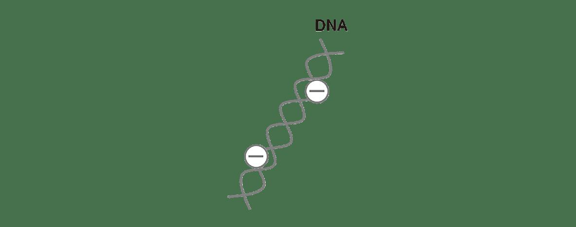 高校 生物 遺伝19 ポイント1 DNAの図