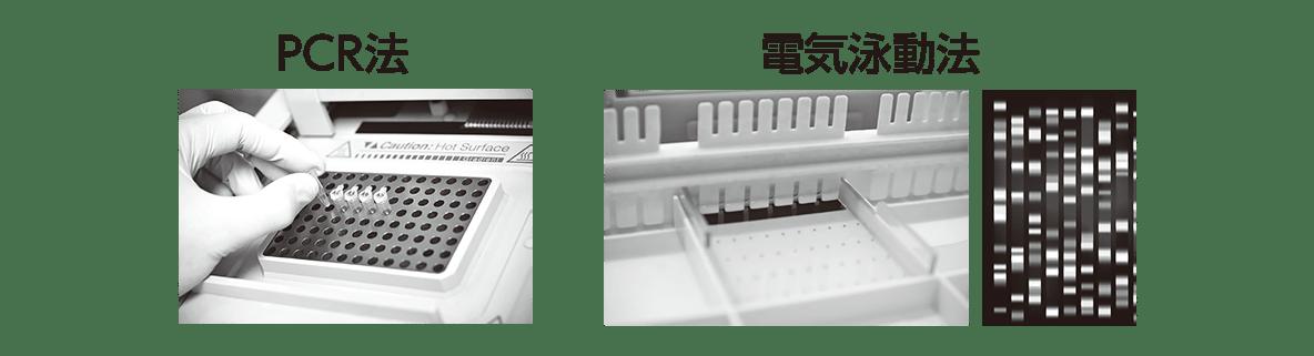 高校 生物 遺伝20 ポイント1 PCR法と電気泳動法の図