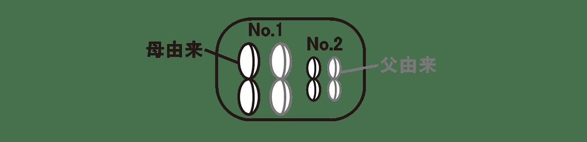 高校 生物 生殖5 ポイント2 左上の細胞の図、矢印なし