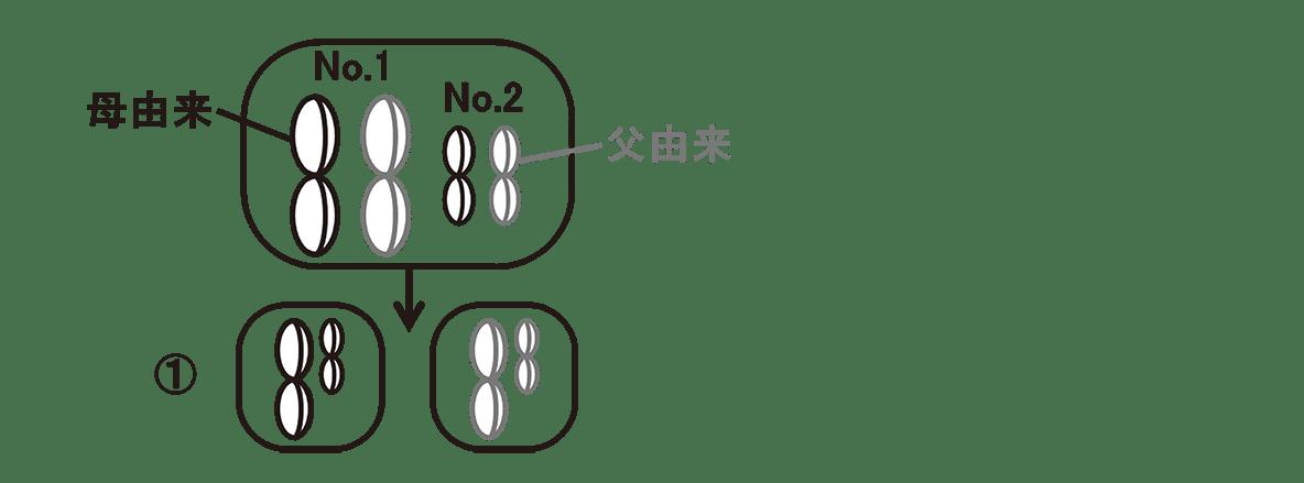高校 生物 生殖5 ポイント2 左上の細胞の図・①の右にある2つの細胞