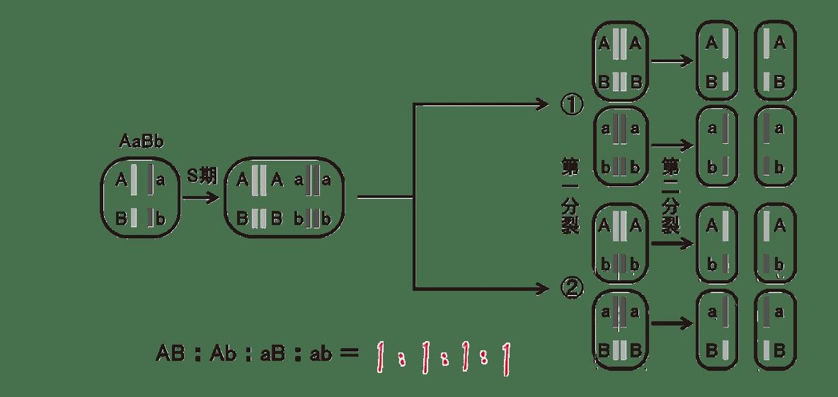 高校 生物 生殖6 ポイント2 図