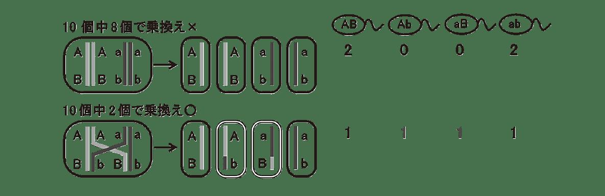 高校 生物 生殖7 ポイント2 左に描かれた2つの細胞、それぞれの細胞の右に描かれた4つの細胞、4つの配偶子の図と2,0,0,2の数字、1,1,1,1の数字