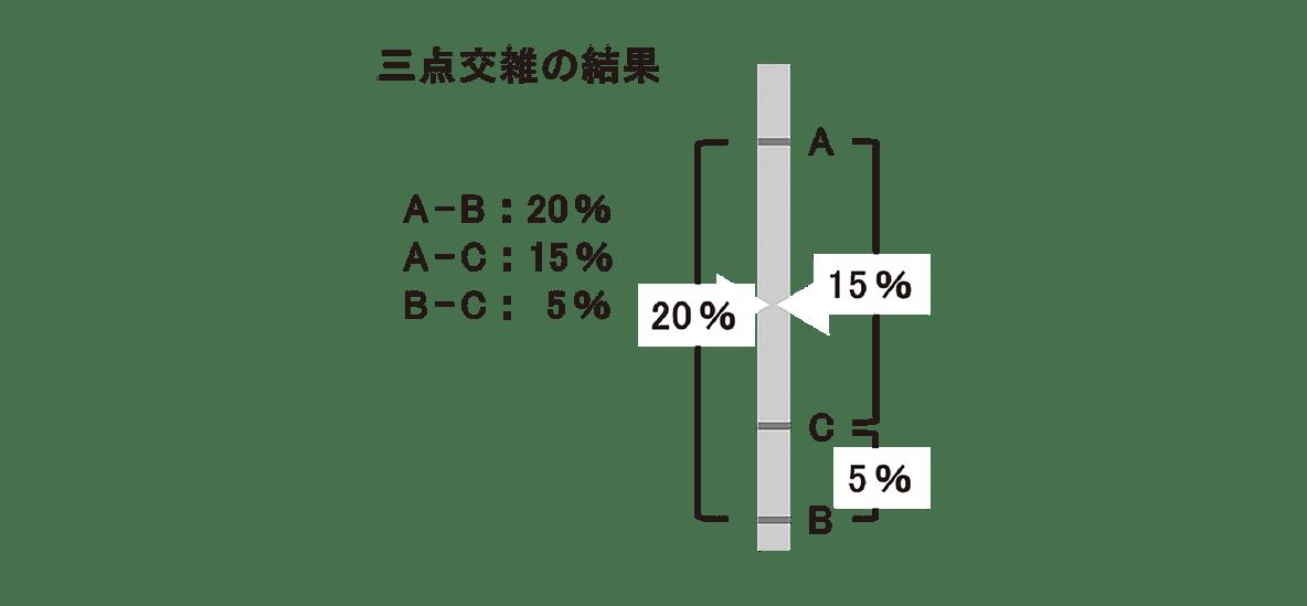 高校 生物 生殖8 ポイント2 図の左半分、矢印は除く