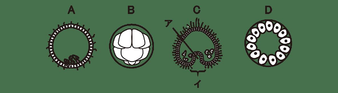 高校 生物 動物の発生10 演習2 演習2・図