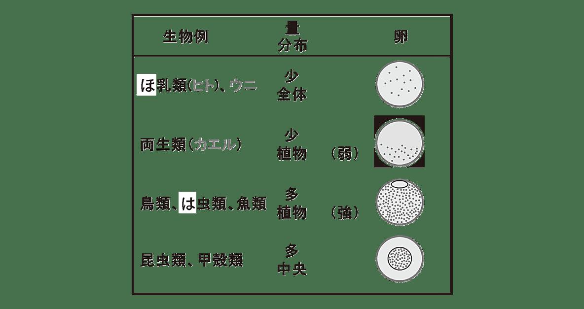 高校 生物 動物の発生3 ポイント2 表・すべてあける・「卵割」の列をすべて消す