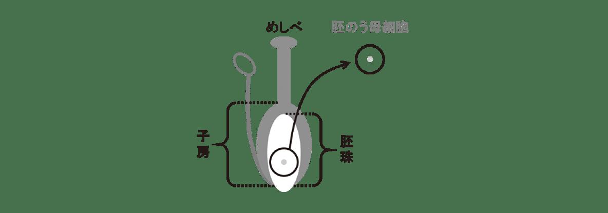 高校 生物 植物の発生2 ポイント2 図・めしべと胚のう母細胞まで、すべてうめる