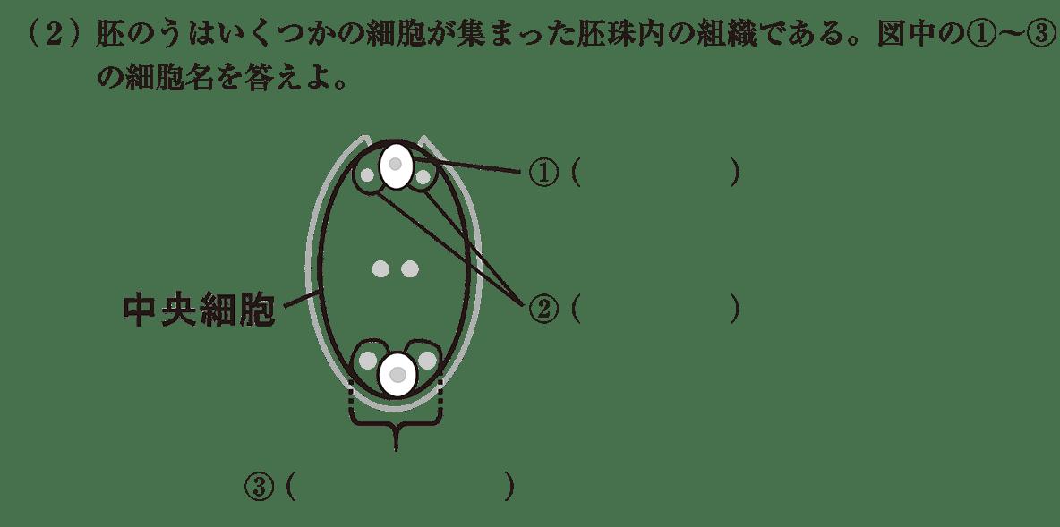 高校 生物 植物の発生2 練習 練習(2)