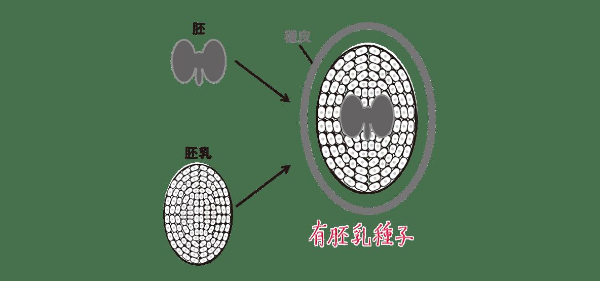 高校 生物 植物の発生4 ポイント3 図・無胚乳種子の図のみ除く・すべてうめる