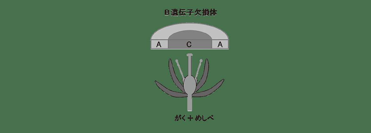 高校 生物 植物の発生5 ポイント3 中央図すべて