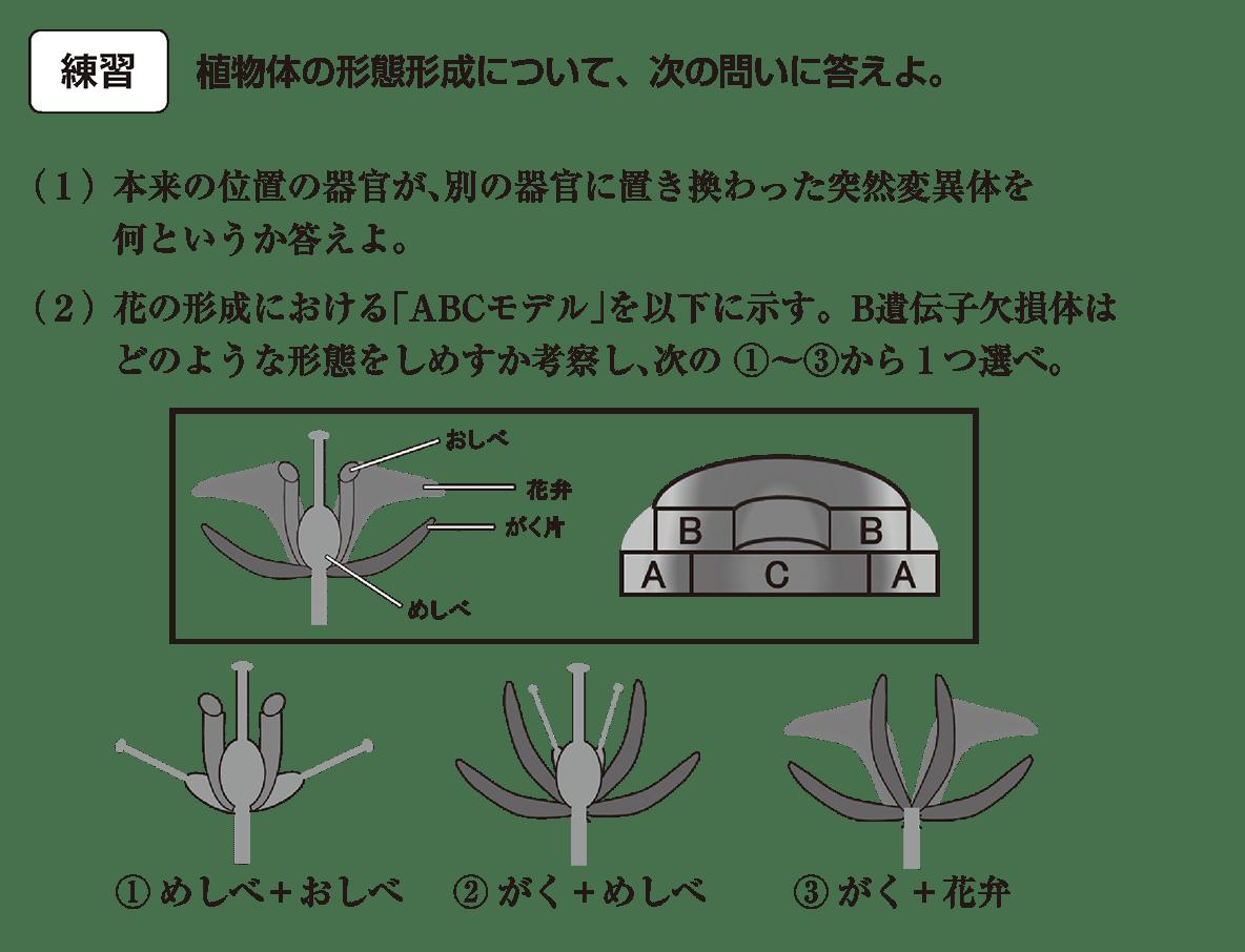 高校 生物 植物の発生5 練習 すべて空ける