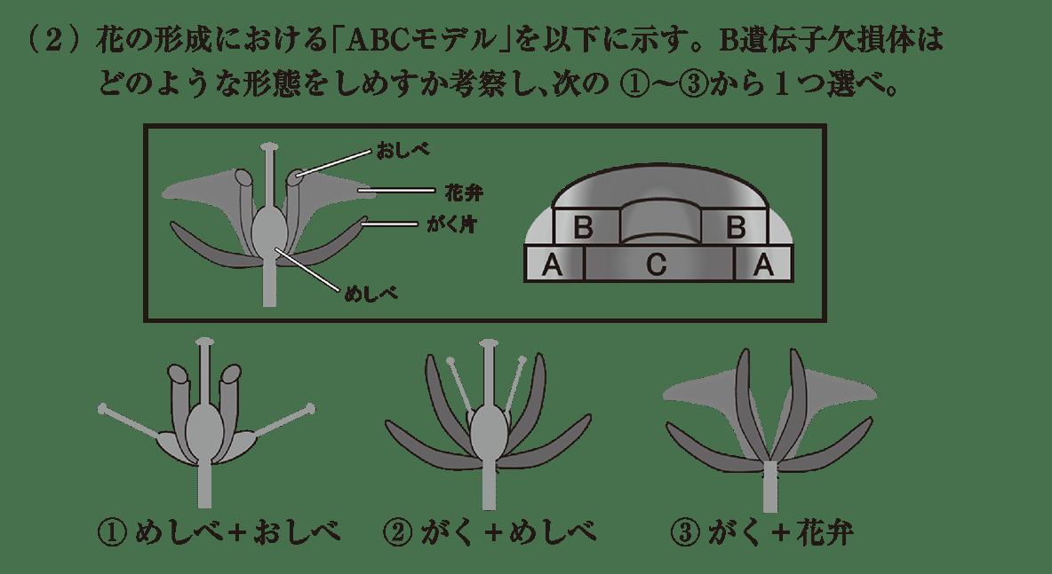 高校 生物 植物の発生5 練習 練習(2)