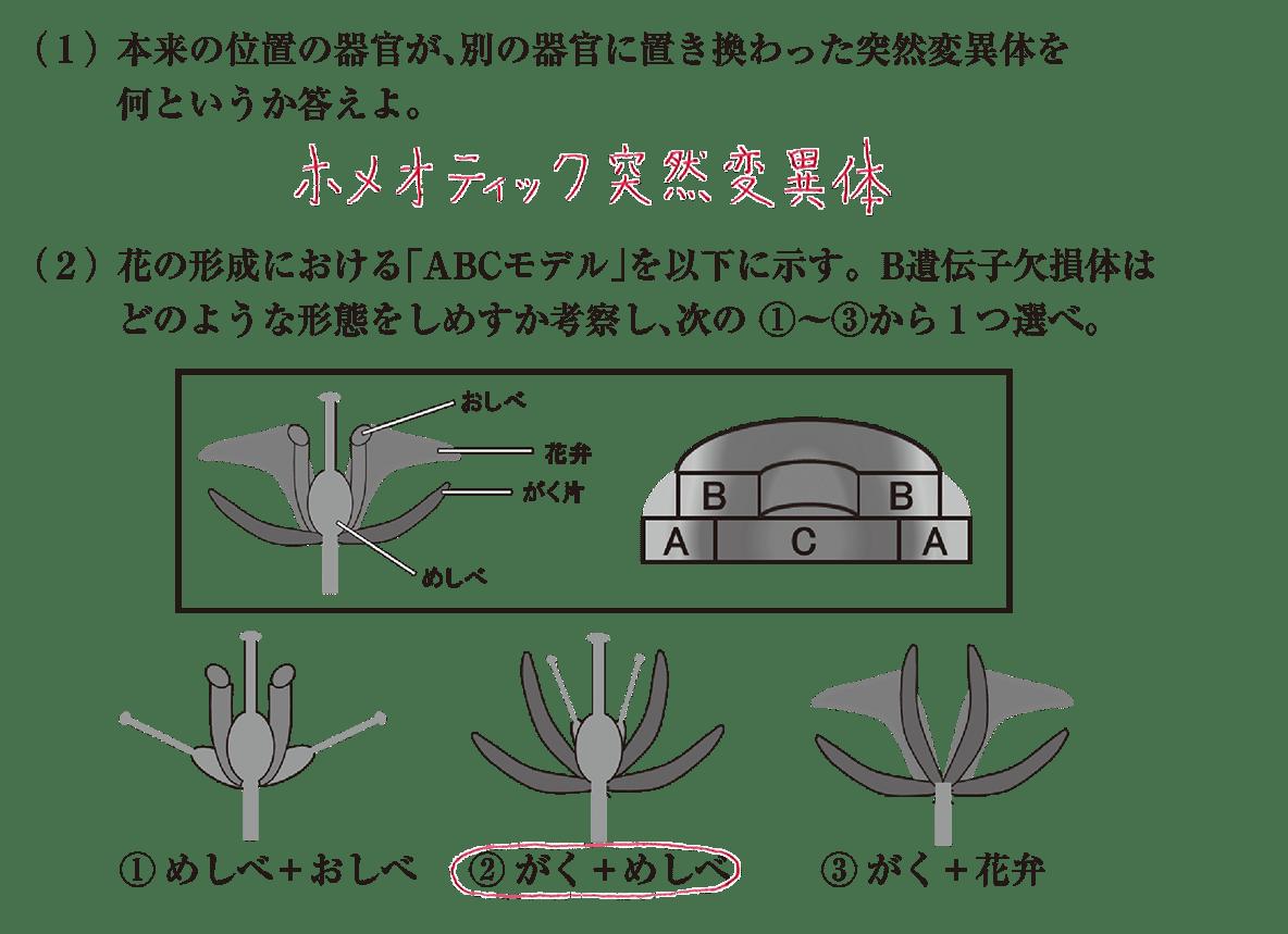 高校 生物 植物の発生5 練習 すべてうめる