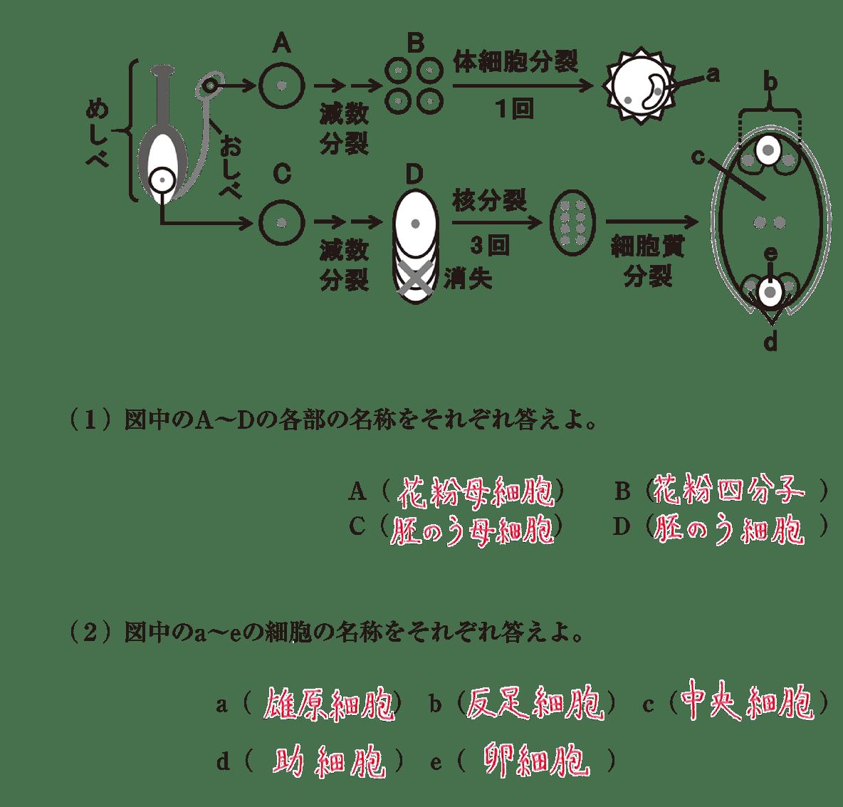 高校 生物 植物の発生6 演習1 すべてうめる