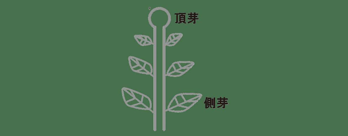 高校 生物 植物生理6 ポイント1 図