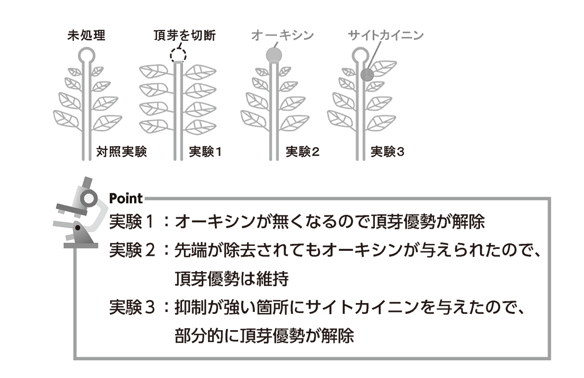高校 生物 植物生理6 ポイント3 すべてうめる