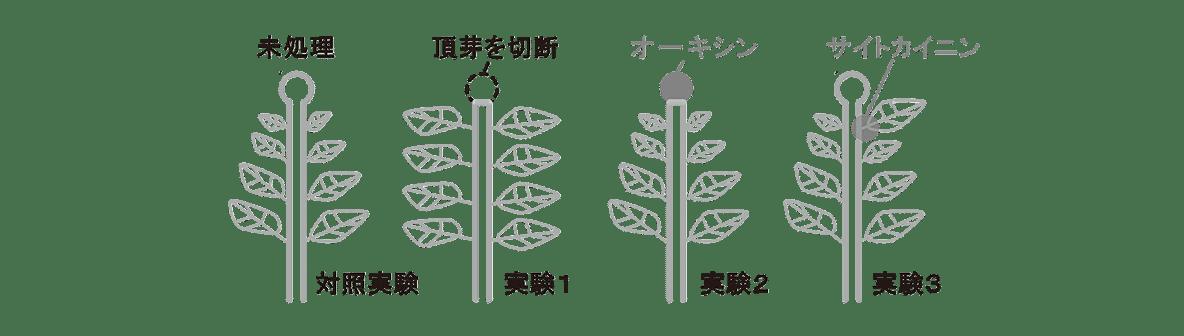 高校 生物 植物生理6 ポイント3 対照実験の図~実験3の図