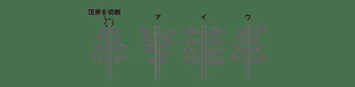高校 生物 植物生理6 練習 練習(3)図