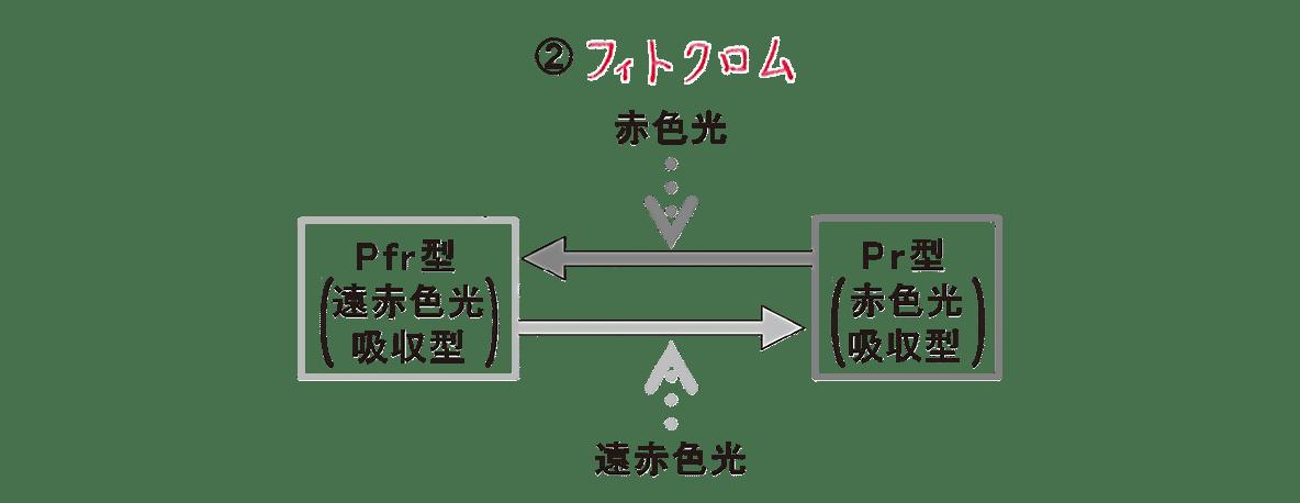 高校 生物 植物生理10 ポイント2 ②の図・すべてうめる