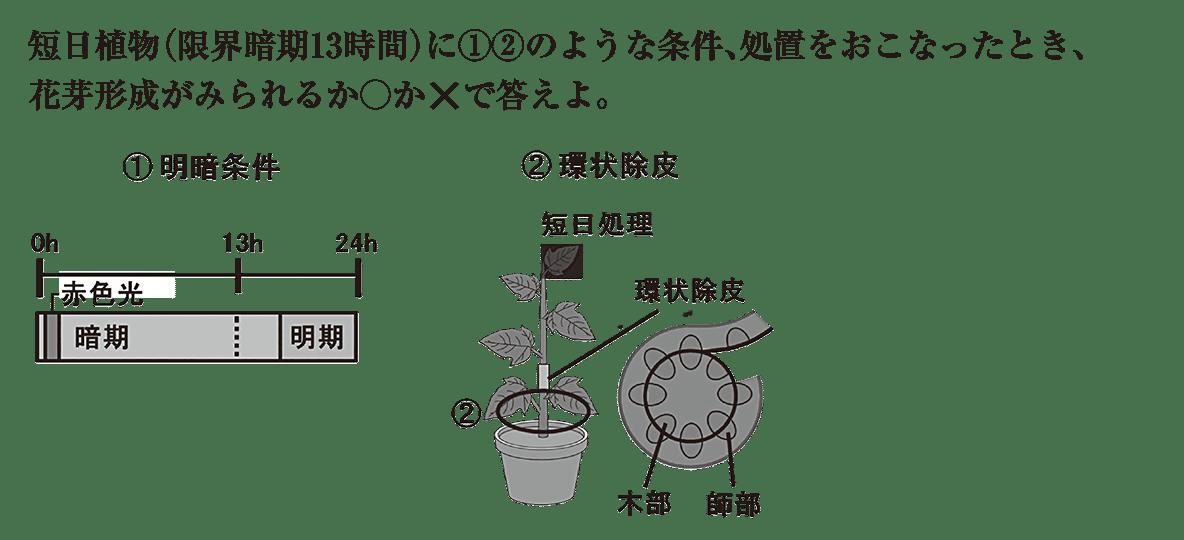 高校 生物 植物生理13 練習 問題文と図