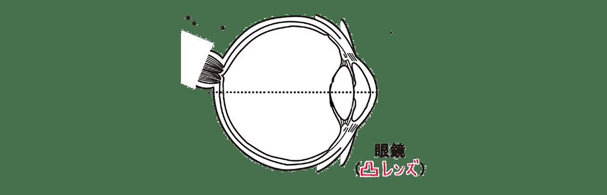 高校 生物 動物生理9 ポイント1 眼球の図 凸レンズの図とそれを通った光の線なし