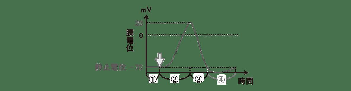 高校 生物 動物生理13 ポイント2 グラフのみ・活動電位を表す矢印や文字けす