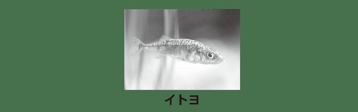 高校 生物 動物生理27 ポイント1 写真