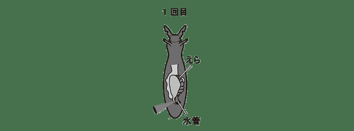 高校 生物 動物生理29 ポイント2 一番左の図