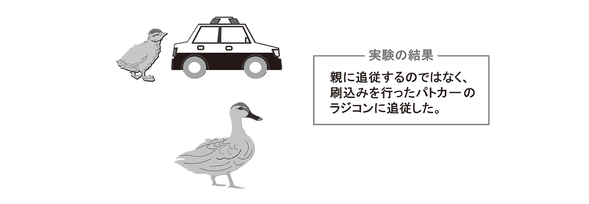 高校 生物 動物生理30 ポイント2 雛と親ガモとパトカーの図