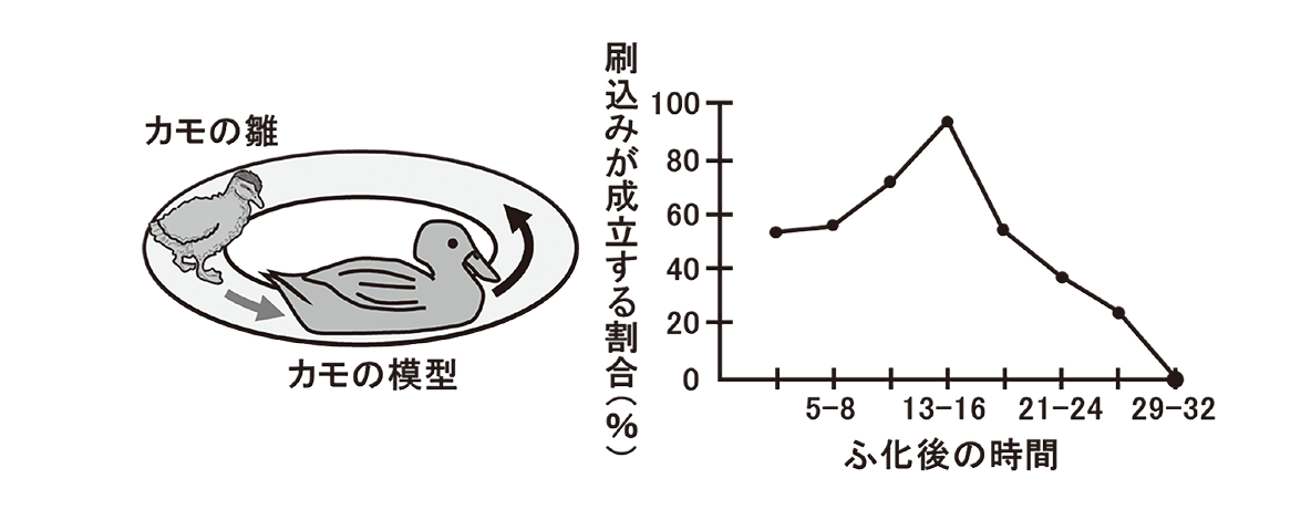 高校 生物 動物生理30 ポイント3 図とグラフ