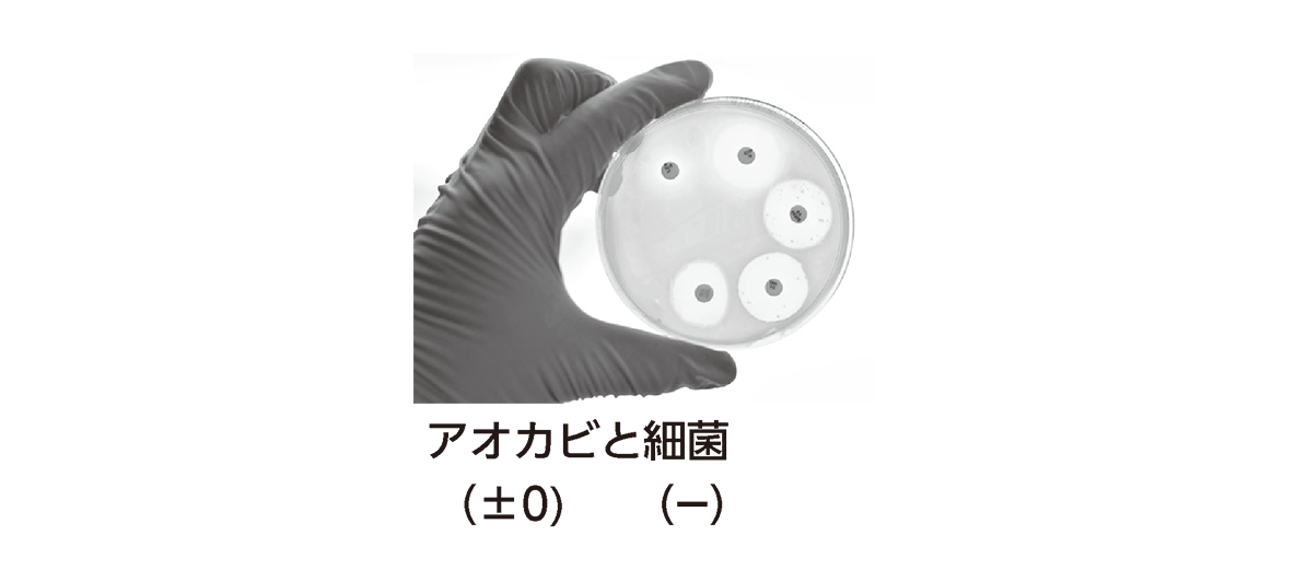高校 生物 個体群10 ポイント3 アオカビと細菌の図