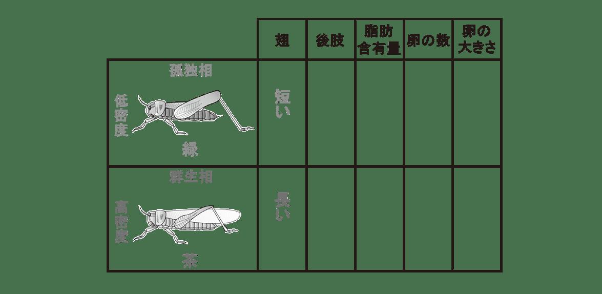 高校 生物 個体群2 ポイント2 表、翅の項目埋める
