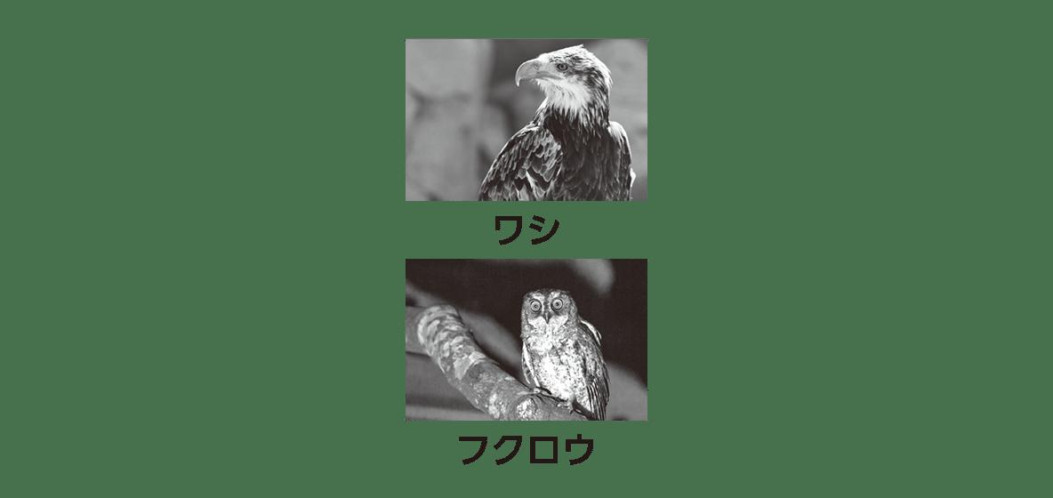 高校 生物 個体群9 ポイント3 ワシとフクロウの写真