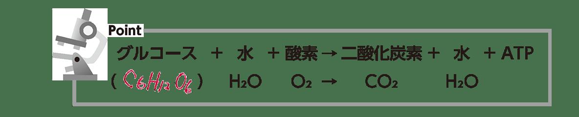 高校 生物基礎 細胞25 ポイント3の反応式