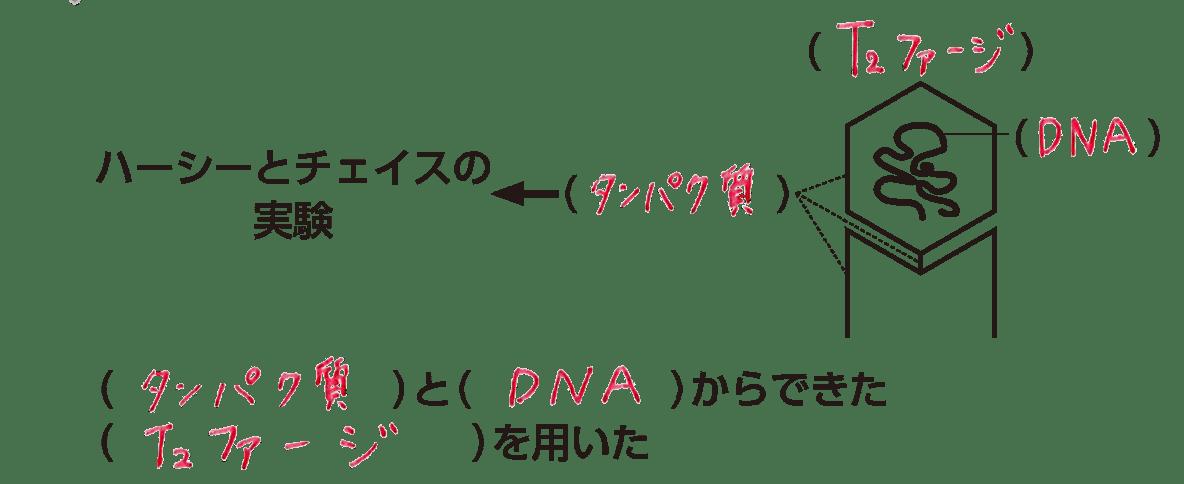 高校 生物基礎 遺伝子3 ポイント1 答え全部