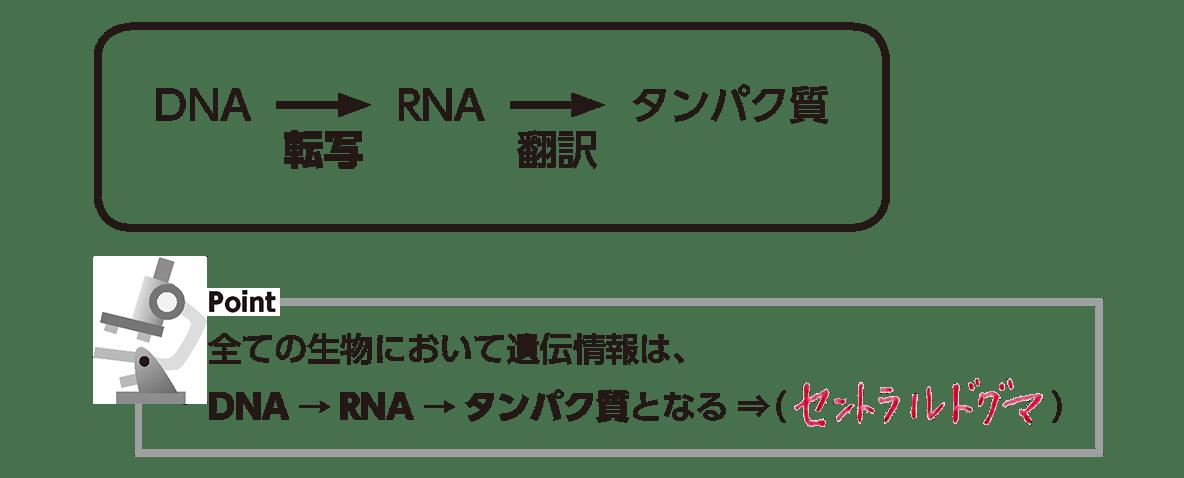 高校 生物基礎 遺伝子6 ポイント1 答え全部