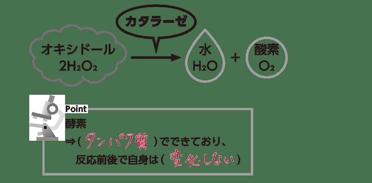 過 酸化 水素 分解