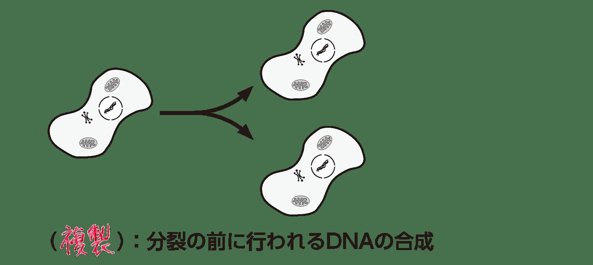 高校 生物基礎 遺伝子15 ポイント1 答え全部