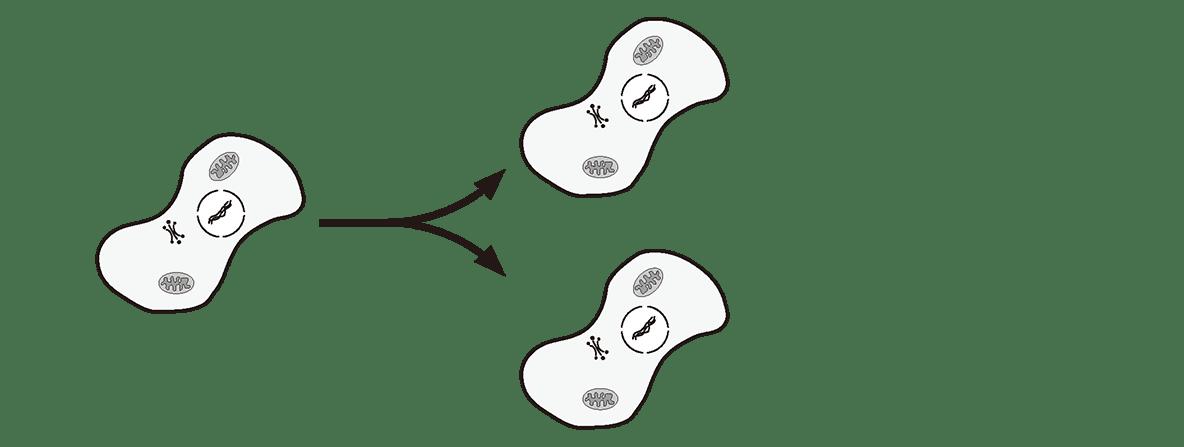 高校 生物基礎 遺伝子15 ポイント1 図のみ