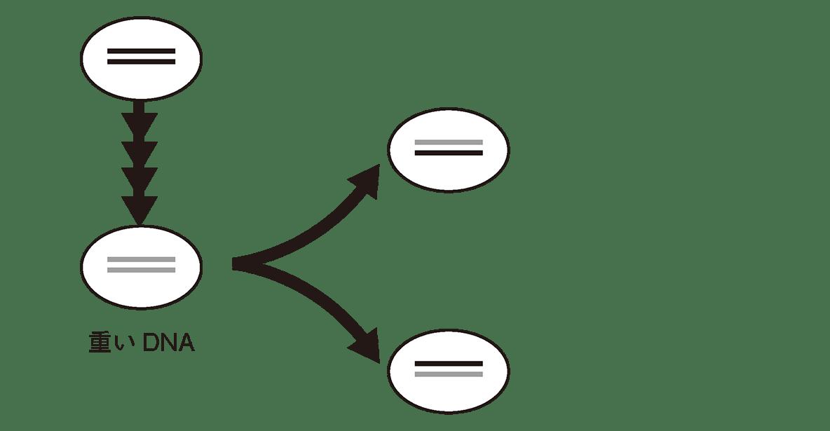 高校 生物基礎 遺伝子1 ポイント1 図 左から2列目まで