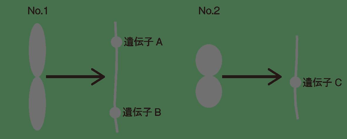 高校 生物基礎 遺伝子26 ポイント2 図のみ