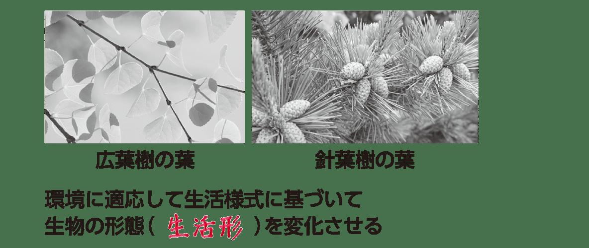 高校 生物基礎 生物の多様性2 ポイント1 全て埋める