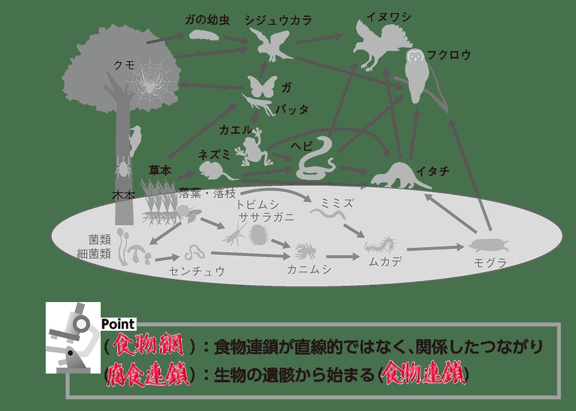 高校 生物基礎 生態系2 ポイント3 (前回の図です)
