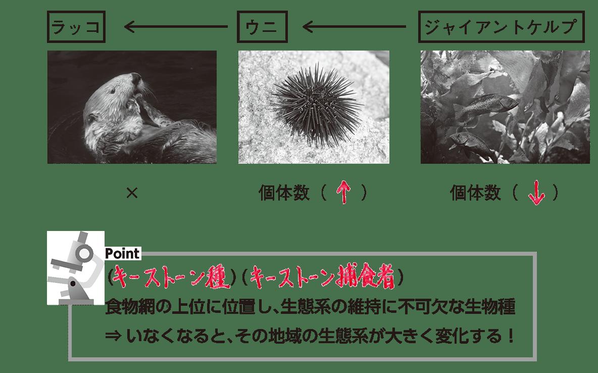 高校 生物基礎 生態系3 ポイント1